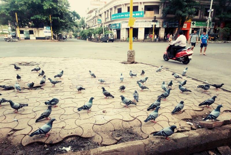 India władza jedność zdjęcia stock