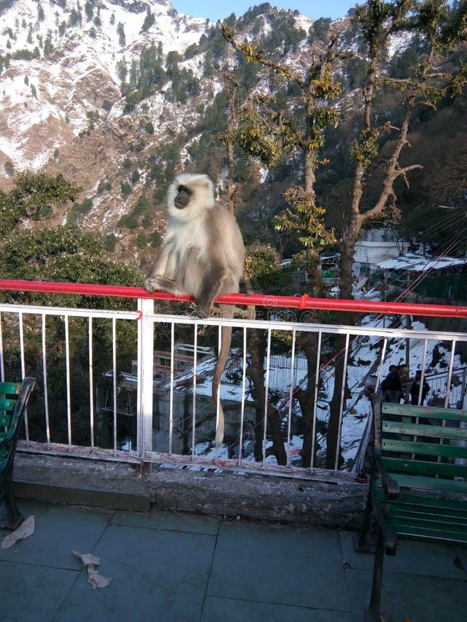 Indianów pielgrzymów sławny miejsce w India małpy obsiadanie poręczu dokąd za na jest naturalnym widokiem obrazy royalty free