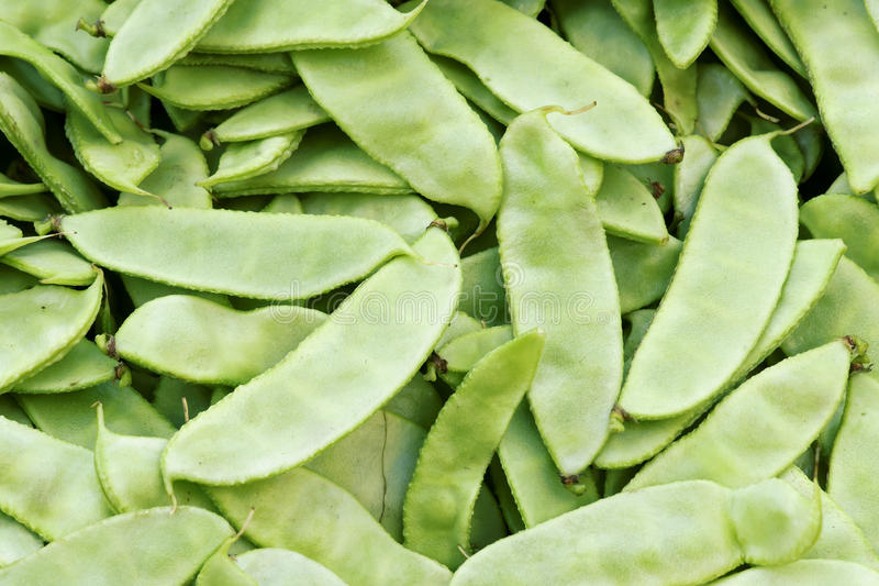 Indian Bean Pods Royalty Free Stock Image