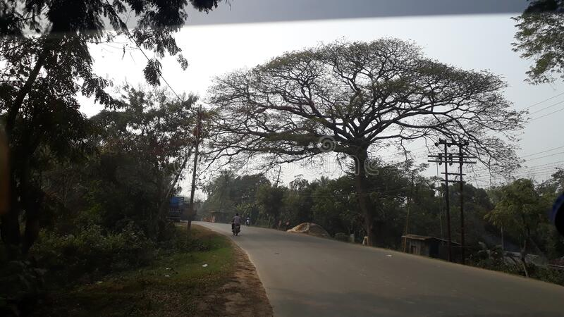 Indian beautiful tree beside the road one man ride Scottish a lonely. royalty free stock photography