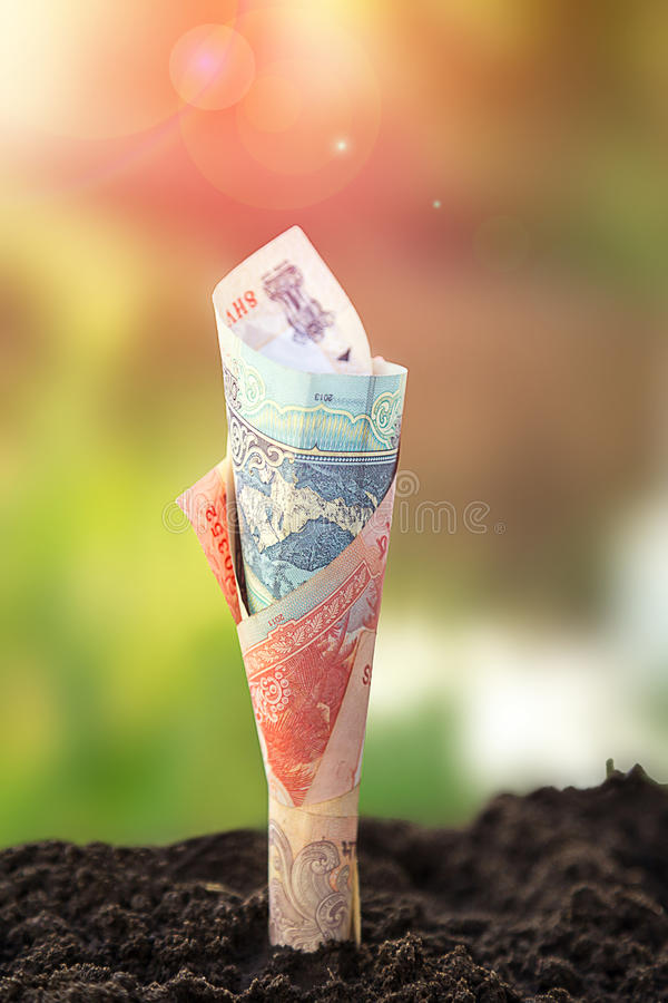 Indian bill grow from the ground royalty free stock photography