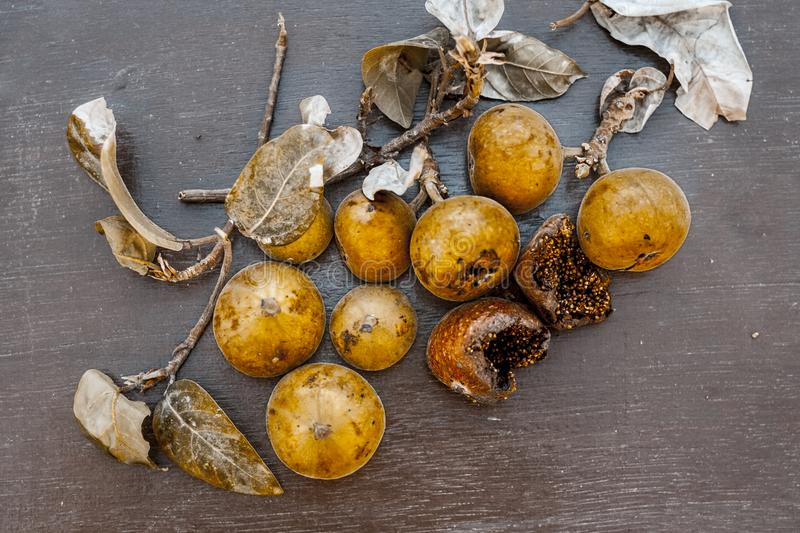 Indian cluster fig on a wooden surface. stock photos