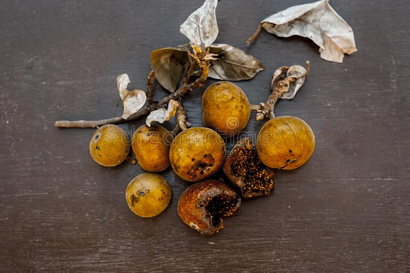 Indian cluster fig on a wooden surface. royalty free stock images