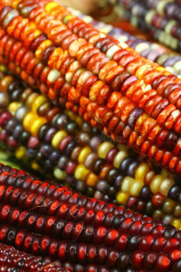 Free Indian Corn 2 Stock Photos - 1394843