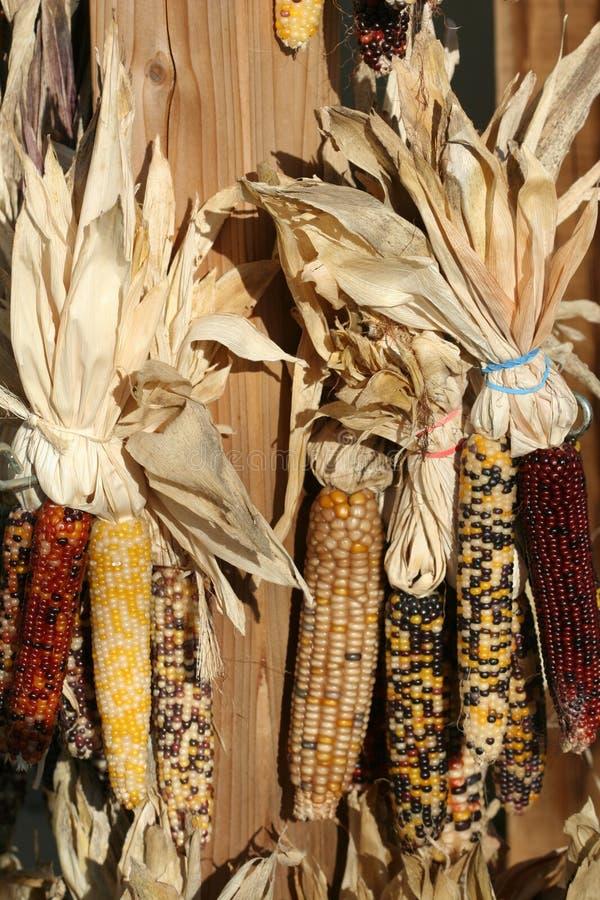 Free Indian Corn Royalty Free Stock Image - 21485076