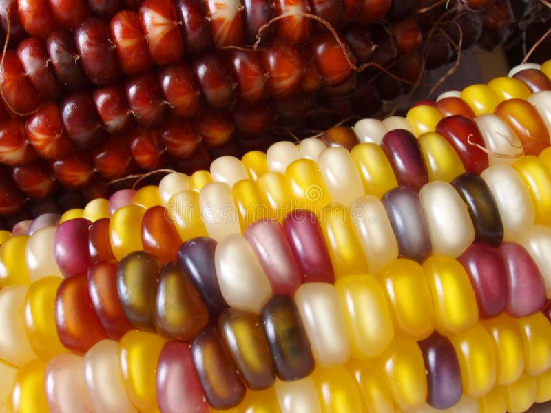 Download Indian Corn stock image. Image of cookout, closeup, breakfast - 258793