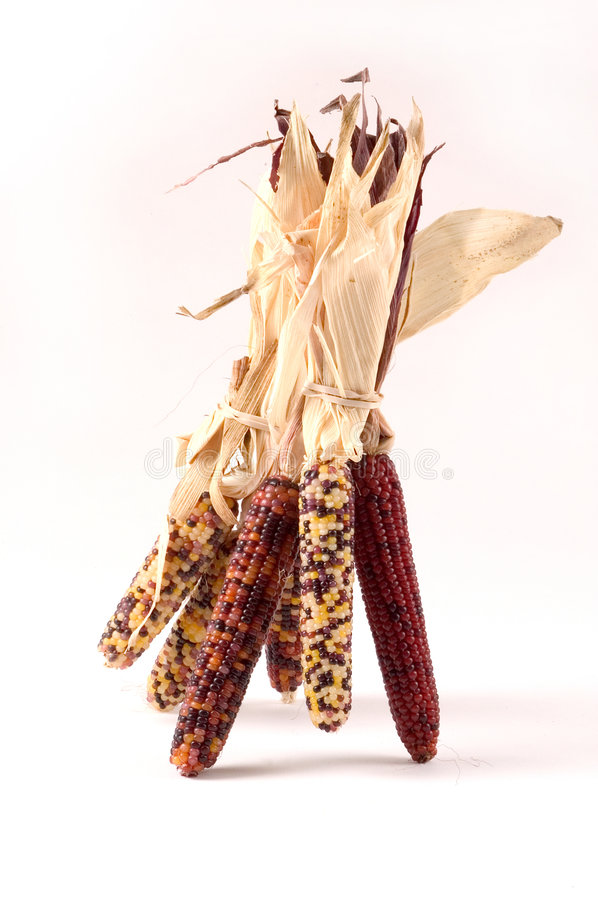 Free Indian Corn Royalty Free Stock Image - 28096