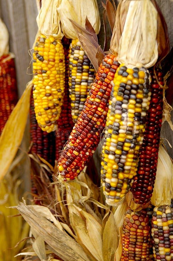 Free Indian Corn Stock Photos - 3465353