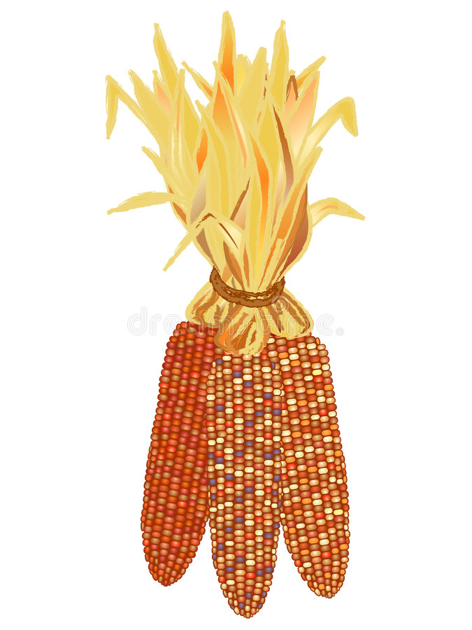 Indian Corn. Jpeg bundle of colorful indian corn cobs vector illustration