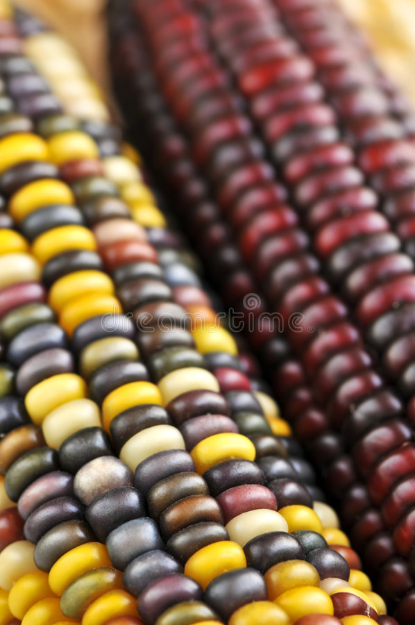 Free Indian Corn Royalty Free Stock Photos - 6368798