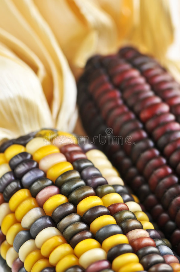 Free Indian Corn Stock Photos - 6515243