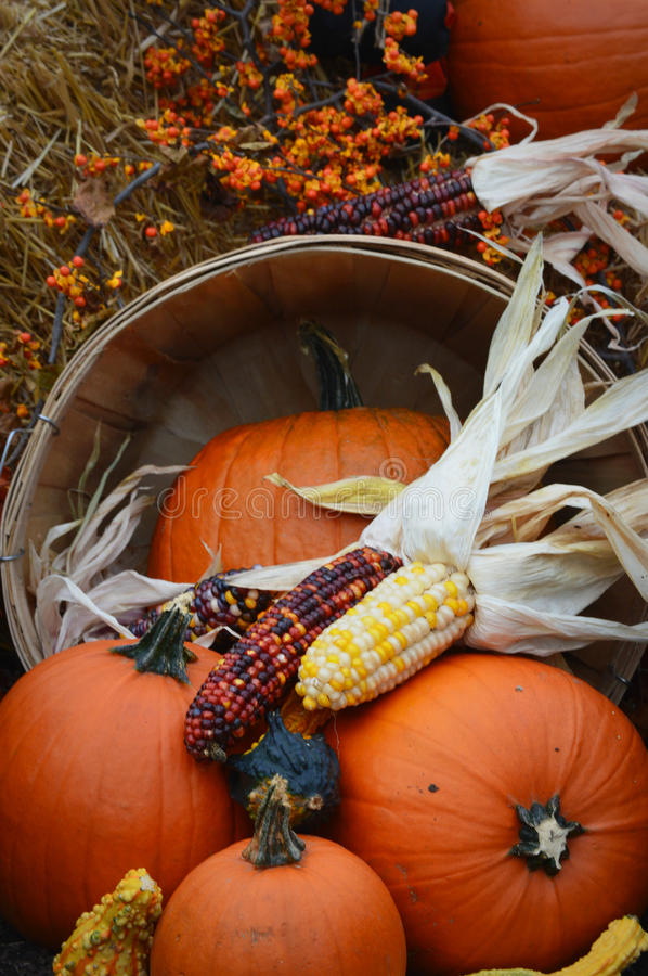 Indian Corn, Pumpkin Fall Display royalty free stock photos
