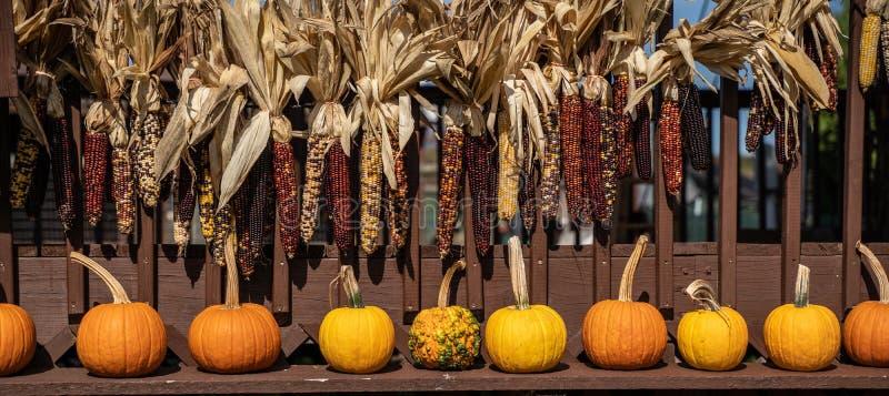 Indian Corn and Pumpkins stock images