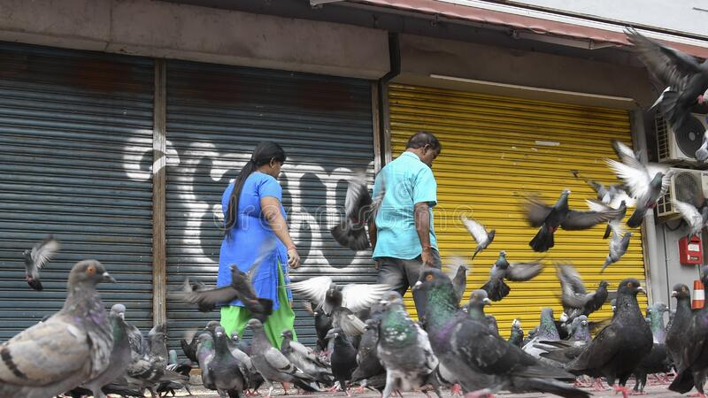 Indian couple feeding pigeons on street in Johor Bahru, Malaysia. Johor Bahru, Malaysia- 27 Jan, 2020: Indian couple feeding pigeons on street in Johor Bahru stock photos