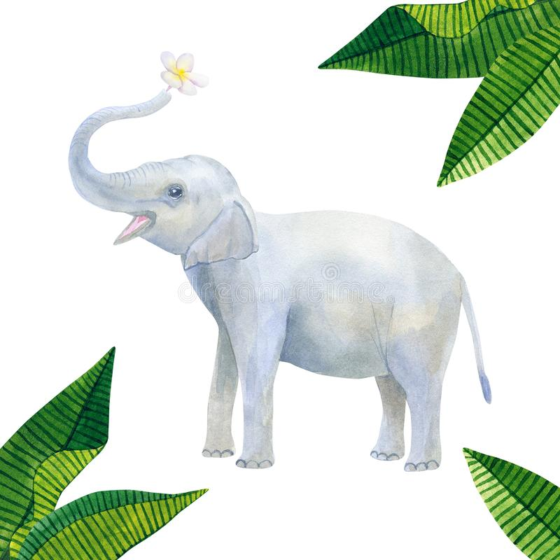 Indian cute baby elephant holds a white flower: frangipani or plumeria and green tropical leaves. Hand drawn watercolor vector illustration