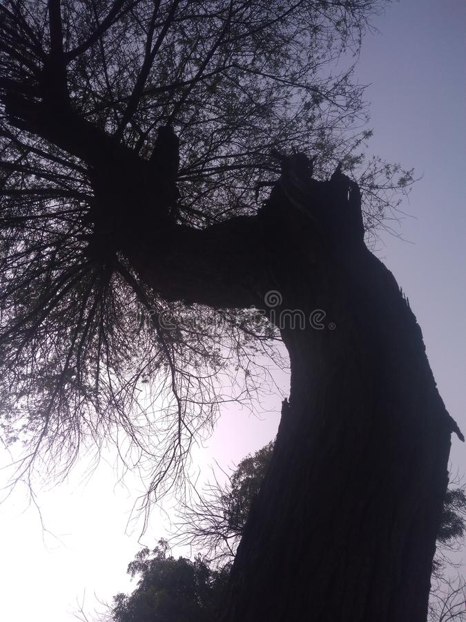 Indian dead mood tree. With a long wood stock photo