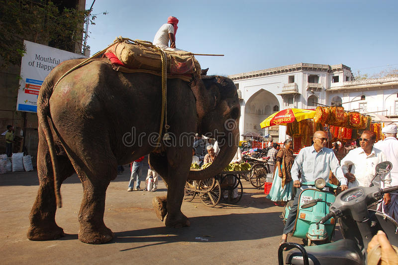 Download Indian Diversity editorial photo. Image of transport - 24499351