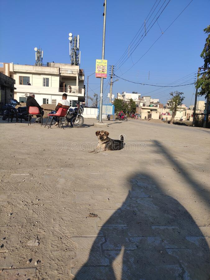 An Indian dog enjoying the sunshine in the winter. Enjoying full sunshine, Sector 10 Ambala City Haryana India. Very happy to find myself with some conscience royalty free stock photography