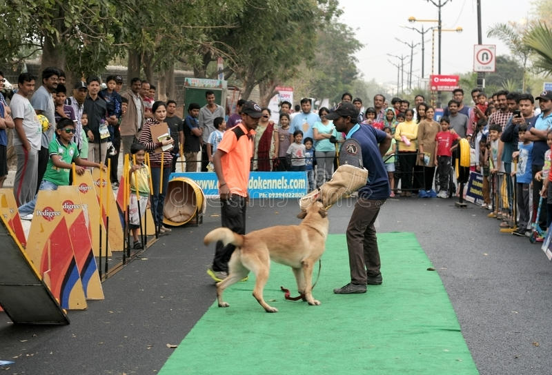 Indian Dog trainer show the attack style of the dog. During happy roads program (vehicular traffic stopped) on February28, 2015 in Hyderabad, India royalty free stock images