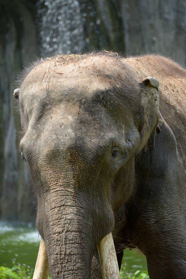 Free Indian Elephant Royalty Free Stock Images - 48656289