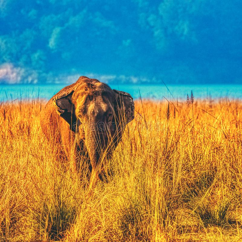 Indian elephant with Ramganga Reservoir in background - Jim Corbett National Park, India stock images