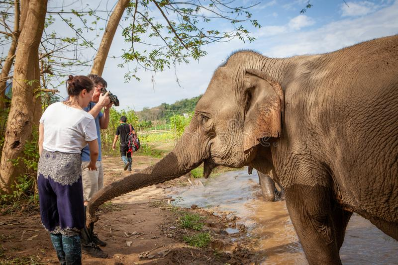 Indian Elephant touching tourists with his trunk. Tourists are taking close up photos. Luang Prabang, Laos stock photo