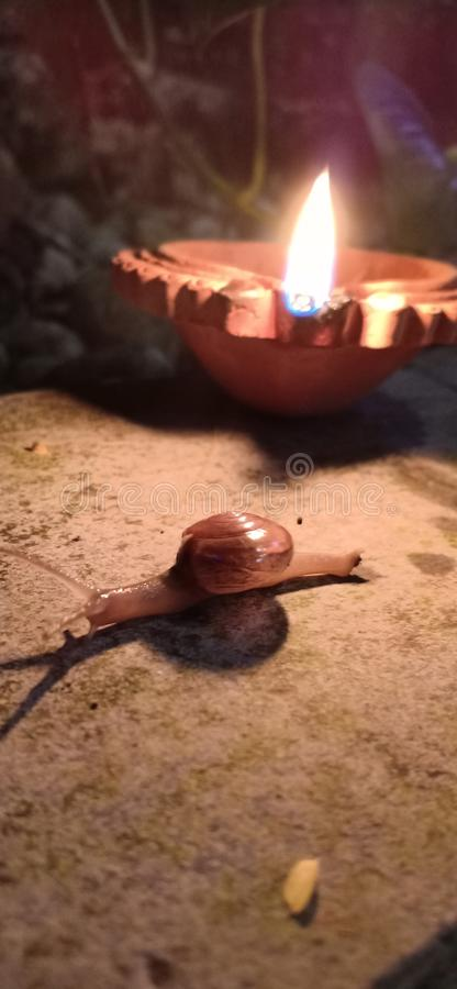 In Indian festival Deepawali, the snail running in the light of lamp looks very beautiful. stock image