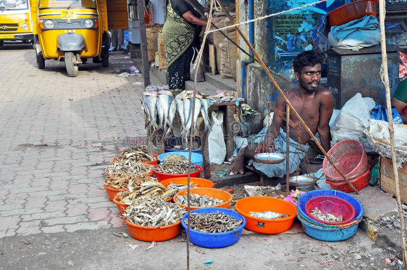Indian Fish Seller royalty free stock image