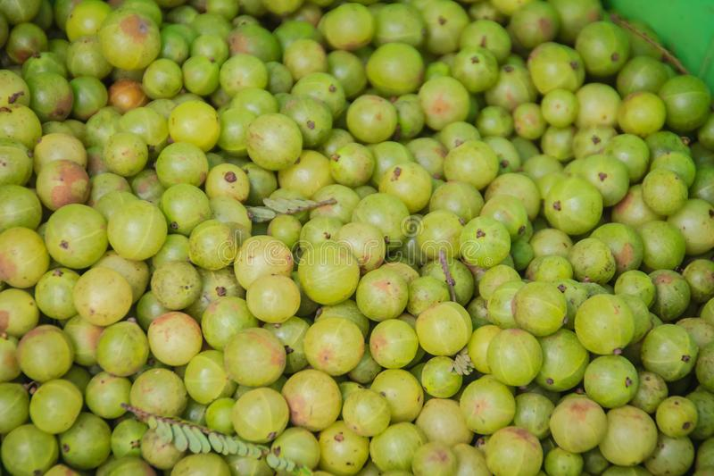 Indian gooseberry (Phyllanthus emblica), also known as emblic, emblic myrobalan, myrobalan, Indian gooseberry, Malacca tree, or am royalty free stock image