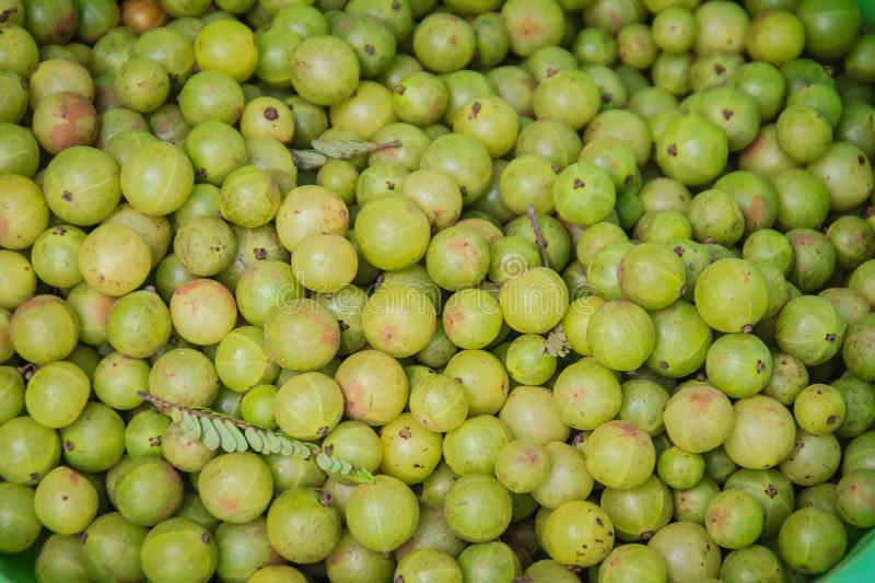 Indian gooseberry (Phyllanthus emblica), also known as emblic, emblic myrobalan, myrobalan, Indian gooseberry, Malacca tree, or am stock images