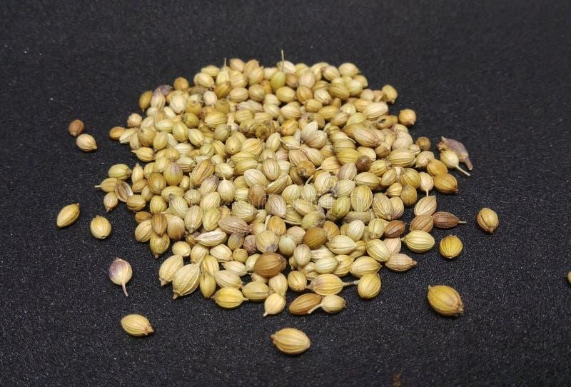 Indian kitchen, food ingredient coriander seeds stock image