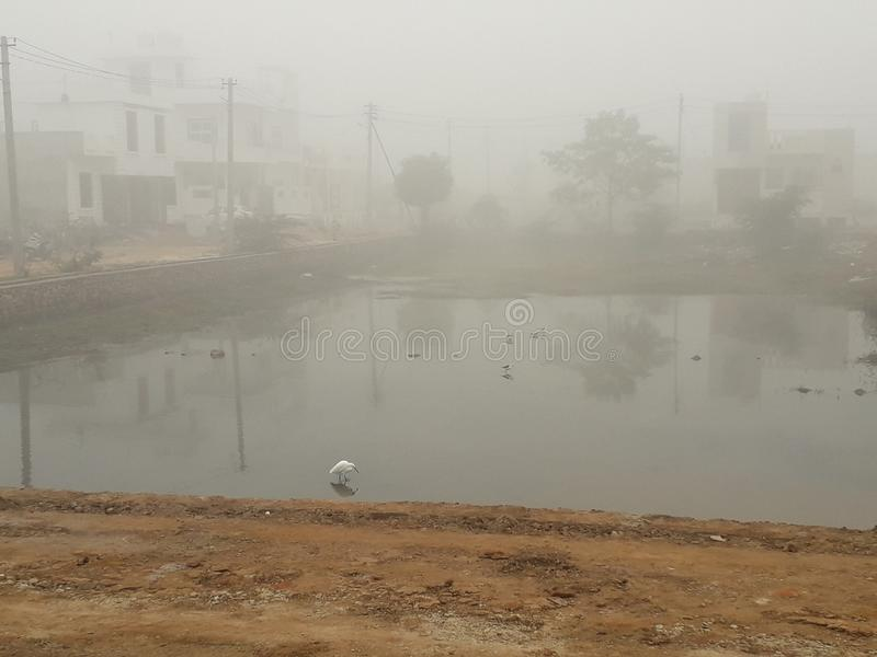 Indian locality covered under fog. A breathtaking view of a winter morning in an Indian locality , bathing with fog . A cute duck wandering in the water body stock photography
