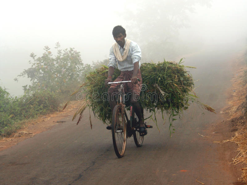 Indian man carrying green grass. Common scene in rural (also urban) India.farmers cultivate green grass for feeding the domesticated cattle which gets collected royalty free stock photography