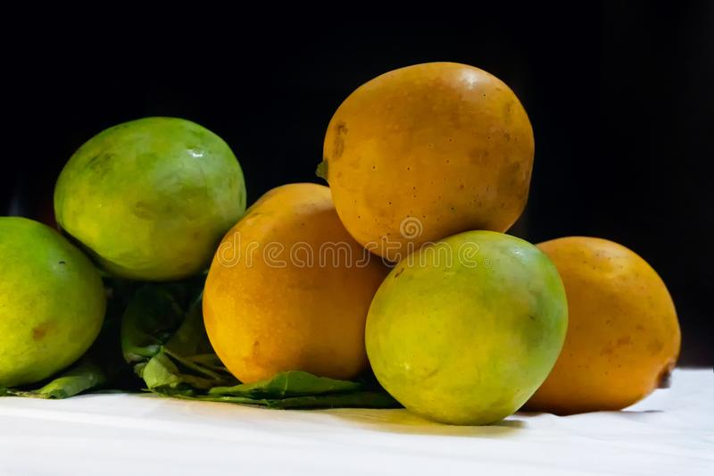 Indian mangoes, king of fruits stock photography