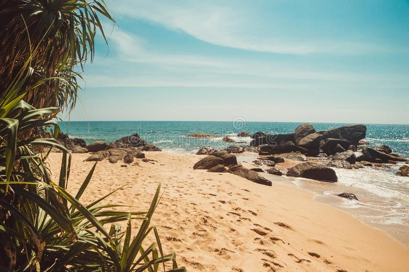 Indian Ocean Coast with stones and pandanus trees. Tropical vacation, holiday background. Deserted with footprints beach. Paradise royalty free stock photos