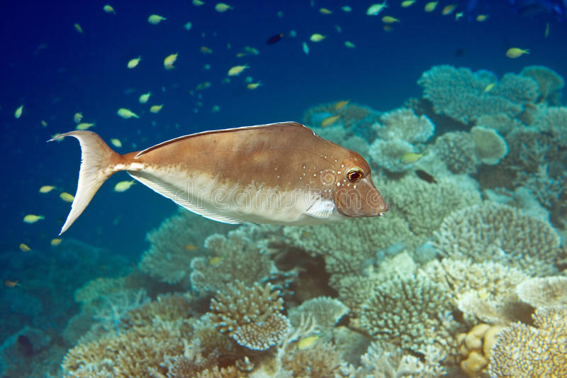 Indian ocean. Fishes in corals. Maldives royalty free stock photos