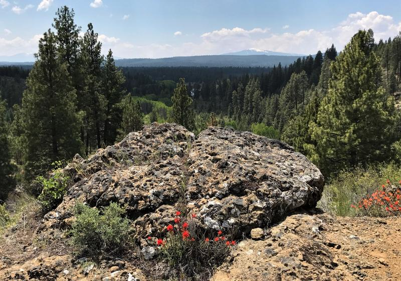 Mountain Overlook and Indian Paintbrush stock photography