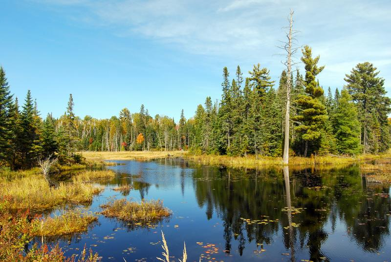 Indian summer at a lake in Algonquin Provincial Park near Toronto in autumn, Canada royalty free stock images