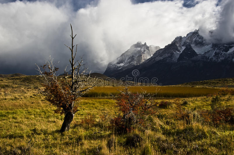 Download Indian Summer. Torres Del Paine. Chile Stock Photo - Image: 19570572