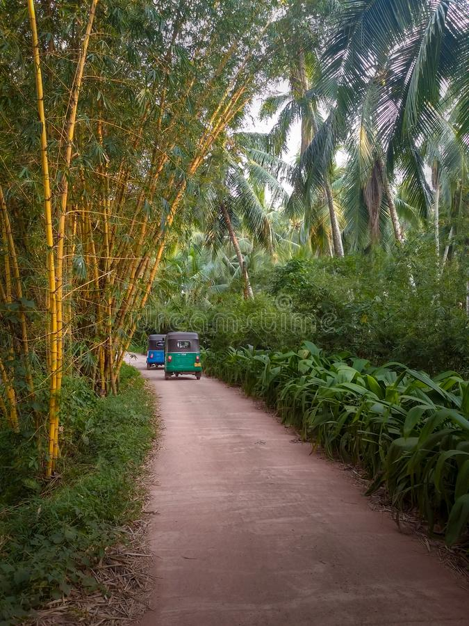Tuk Tuk in the bamboo and palm trees groove royalty free stock photos