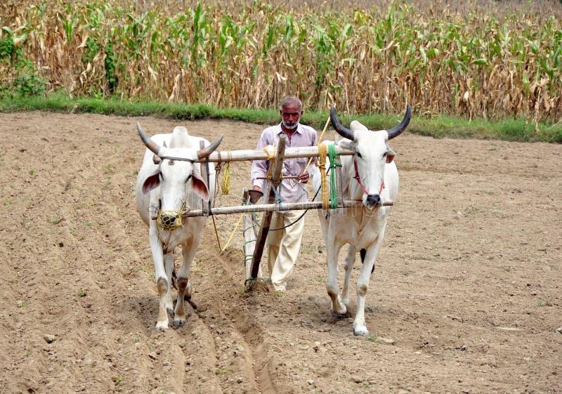Indian village farmer. Ploughing fields in hoshiarpur punjab india royalty free stock images