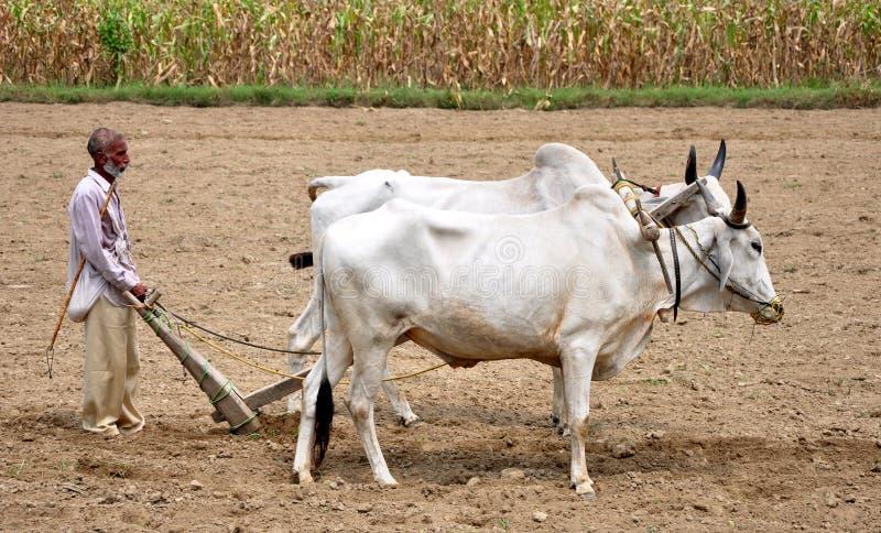 Indian village farmer. Ploughing fields in hoshiarpur punjab india royalty free stock photos