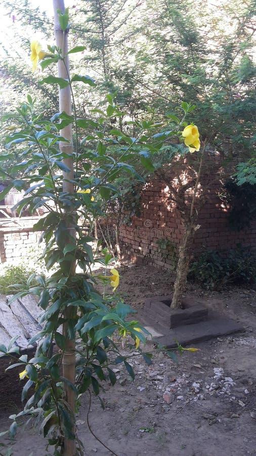 An Indian  village  garden. Flowers, look stock photos