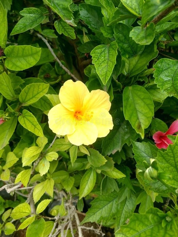 Indian village life garden beautiful flowers. Indian village life garden beautiful f royalty free stock photo