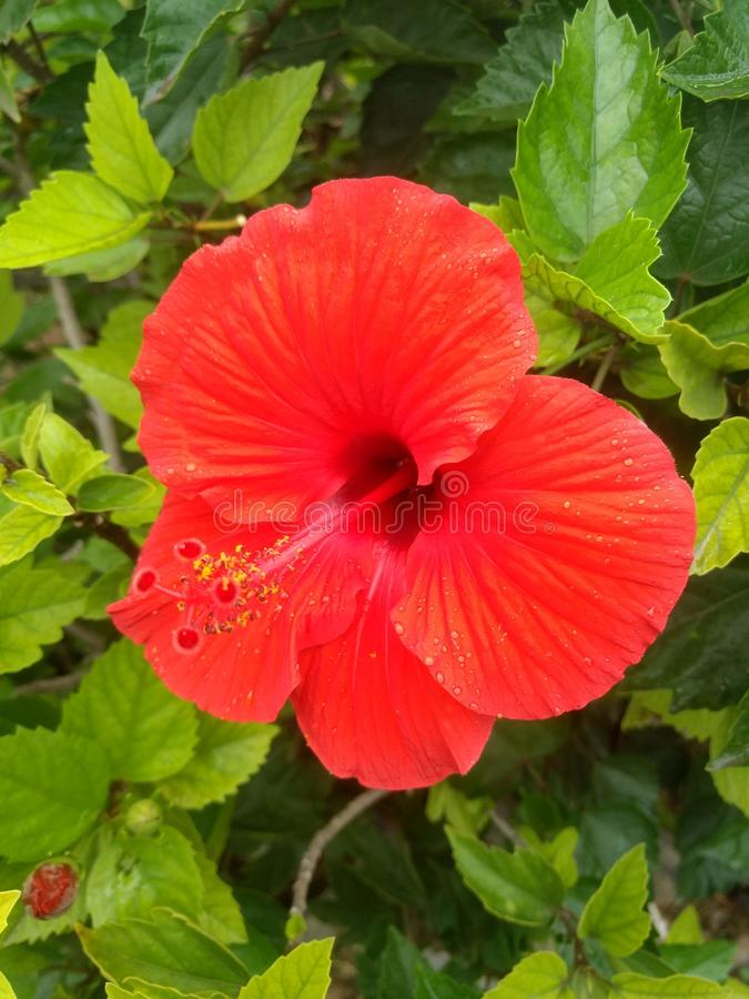 Indian village life garden beautiful flowers. Indian village life garden beautiful f stock photos