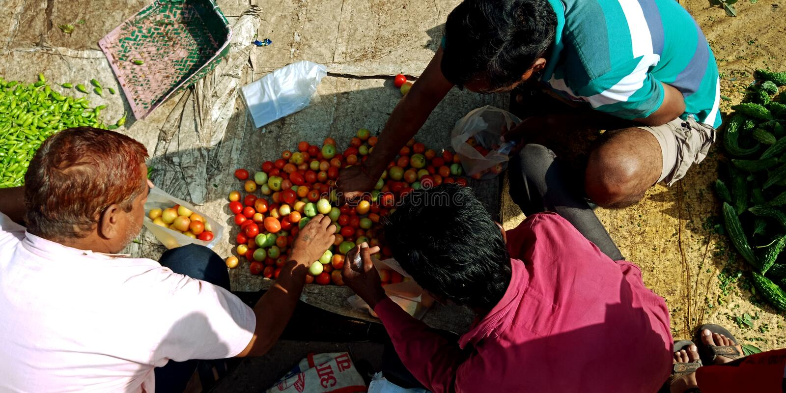 Indian village people are selecting fresh tomato from vegetable shop. Three, men, watching, market, activities, farmers, onion, wholesale, store, agriculture royalty free stock photos