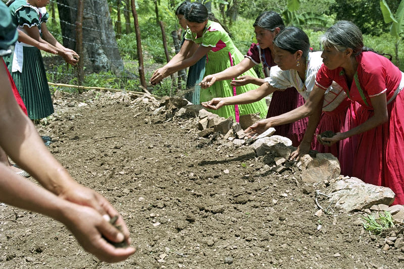 Indian women composting vegetable garden. Guatemala, Chiquimula department, municipality Jocotan: closeup of Indian women in the mountains. The Chorti Maya eat royalty free stock images