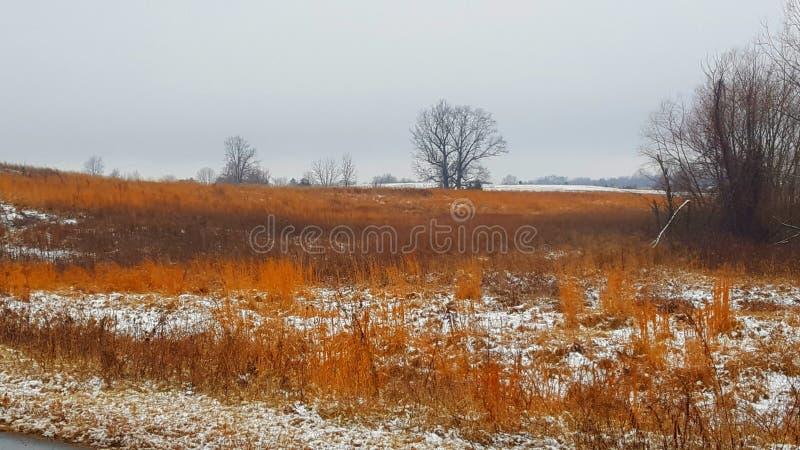 Indiana ogienia trawa 1 zdjęcie royalty free