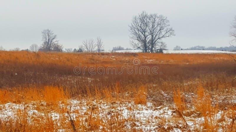 Indiana ogienia trawy Luty śnieg 4 zdjęcia royalty free