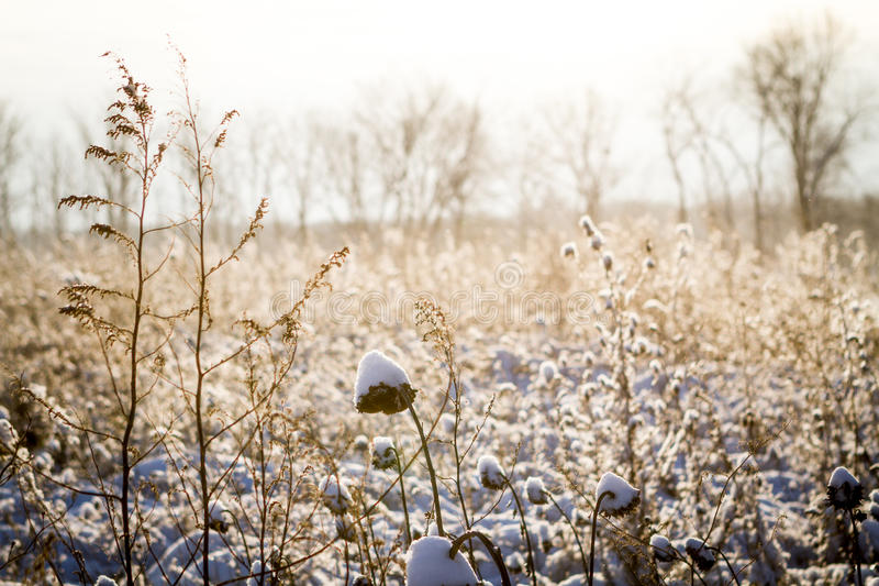 Indiana Snow immagini stock